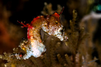 2015/05 May - Indonesia, Lembeh